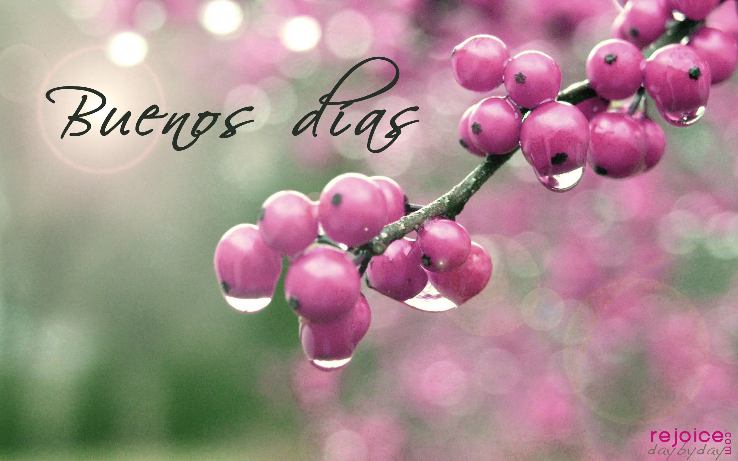 Buenos dias berries